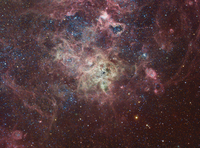 The Tarantula Nebula by  Brad Moore
