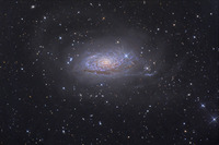 The Sunflower Galaxy  by Tony Hallas